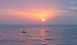 דולפינים בשקיעה, צילום: חיים בלוך